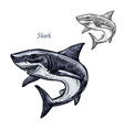 shark fish isolated sketch icon vector image vector image