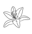 bud flower with white petal from the contour vector image vector image