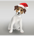 dog jack russell terrier in red hat vector image vector image