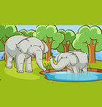 scene with elephants in forest vector image