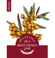 sea buckthorn jam emblem vector image vector image