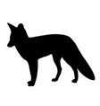 black silhouette of fox on white background of vector image