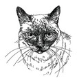 cat head hand drawing vector image