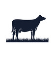 cow silhouette icon black angus vector image vector image