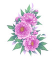 hand drawn floral bunch with pink peony flowers vector image vector image