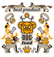 on theme food for dogs vector image