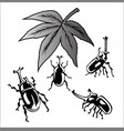 set of beetle dynastinae vector image