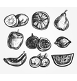 collection hand-drawn fruits vector image