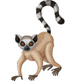 Meerkat with long tail vector image vector image