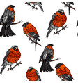 seamless pattern with bullfinches on the branches vector image vector image