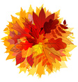 Color leaves Hello autumn concept vector image vector image