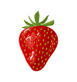 fresh red strawberry on white background vector image vector image