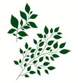 isolated of stylized branches vector image vector image