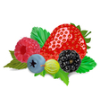 Mixed Summer Berries vector image vector image