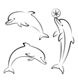 Dolphins and Ball Contours vector image