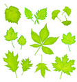 green leaves isolated background vector image