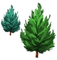 Green spruce in cartoon style on white background vector image vector image