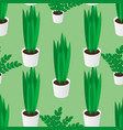 seamless pattern of green homeplants in pots vector image