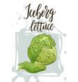 vegetable food banner iceberg lettuce sketch vector image vector image