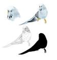 budgerigar blue pet parakeet or budgie vector image vector image