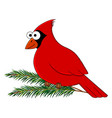 funny cartoon cardinal bird vector image vector image