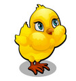 cute yellow cartoon chick isolated on a white vector image