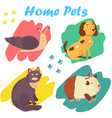 bright images domestic animals cat snail dog vector image