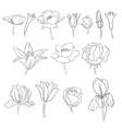 flowers vintage floral set vector image vector image
