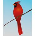 northern cardinal vector image vector image