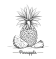 Doodle sweets pineapple vector image vector image