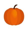 pumpkin thanksgiving food icon vector image