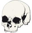skull in profile vector image