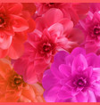 colorful naturalistic blossoming pink orange red vector image vector image