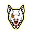 angry bull terrier mascot vector image vector image