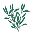 branches foliage natural botanical isolated white vector image