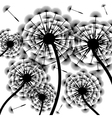 Dandelion silhouette-background vector image vector image
