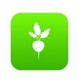 fresh radish icon digital green vector image vector image