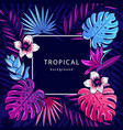 tropical background text with palm vector image vector image