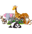 wild animals around the zoo sign vector image vector image