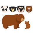 bears different style funny happy animals vector image