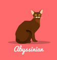 brown abyssinian cat on pink background vector image
