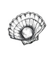 fresh opened scallop hand drawn isolated icon vector image vector image