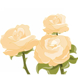 Yellow roses background vector image vector image