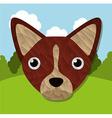 animal cute vector image vector image
