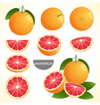 Fruit Set of grapefruit in various styles format vector image vector image