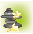 spa stones with frangipani vector image