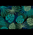 tropical leaves on black background vector image