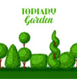 boxwood topiary garden plants seamless border vector image vector image
