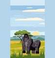 gorilla on the background of the african landscape vector image