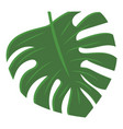 monstera leaf icon cartoon style vector image vector image
